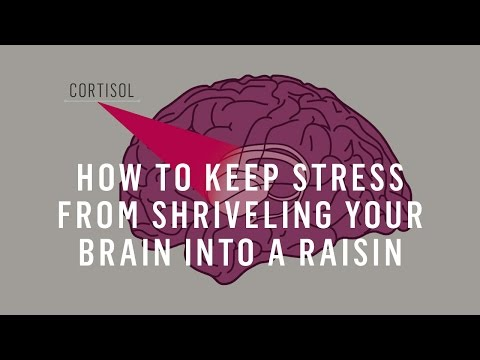 How To Keep Stress From Shriveling Your Brain Into A Raisin