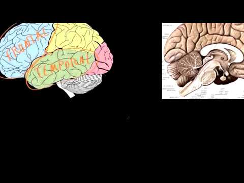 Biological Basic Of Schizophrenia | education portal videos biology